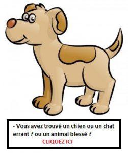 garde chien à domicile