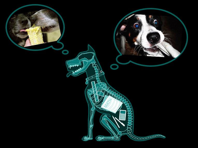 occlusion intestinale chez le chien