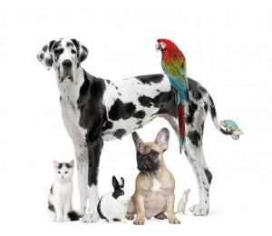 Nous soignons les chiens, les chats, et les nouveaux animaux de compagnie