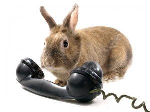 lapin téléphone urgence vétérinaire