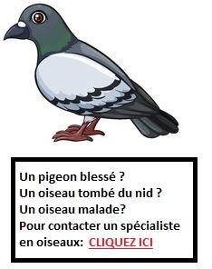 Soins aux oiseaux